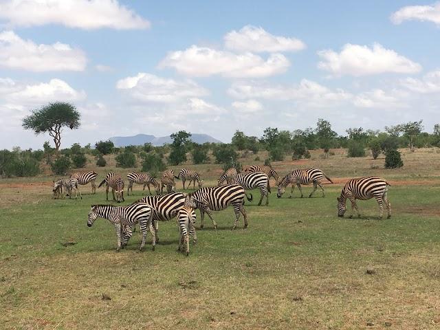 Taita Hills Wildlife Sanctuary