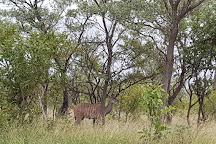 Pabeni Gate Kruger National Park, Hazyview, South Africa