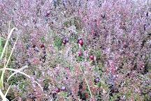 Terra Beata Cranberries, Lunenburg, Canada