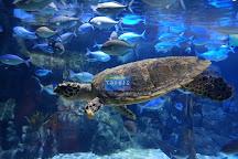 SEA LIFE Kelly Tarlton's Aquarium, Auckland, New Zealand