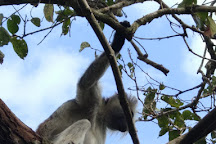 Jozani Forest, Zanzibar Island, Tanzania