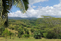 Lavilleon Natural Forest, Chamarel, Mauritius