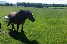 Foel Farm Park, Brynsiencyn, United Kingdom