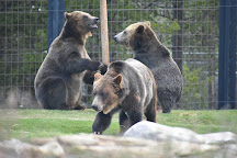 Grizzly and Wolf Discovery Center, West Yellowstone, United States