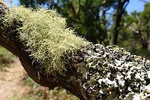 Mount Richmond National Park, Cape Bridgewater, Australia