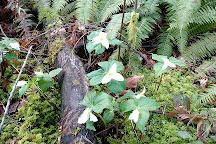 Peavy Arboretum, Corvallis, United States