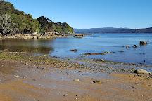 Ulva Island, Stewart Island, New Zealand