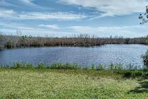 Mrazek Pond, Everglades National Park, United States