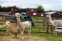 Hillside Animal Sanctuary, Frettenham, United Kingdom