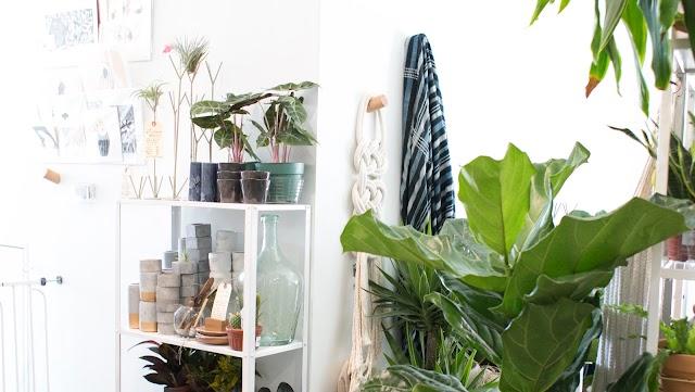Zen Succulent