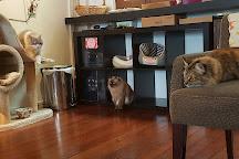 The Company of Cats, Singapore, Singapore