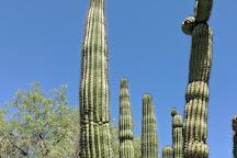 Tucson Botanical Gardens, Tucson, United States