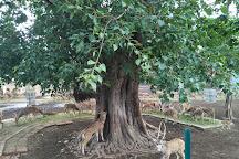 Deer Park, Cuttack, India