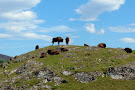 RZSS Highland Wildlife Park
