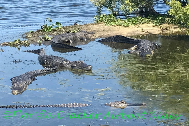 Visit Florida Cracker Airboat Rides Guide Service On Your