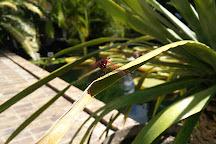 Stellenbosch University Botanical Garden, Stellenbosch, South Africa