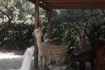 Ardeche Lamas, Saint-Remeze, France