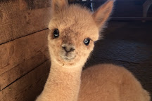 Crystal Lake Alpaca Farm and Boutique, Frankfort, United States