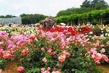 Jindai Botanical Gardens, Chofu, Japan