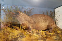 Portsmouth Natural History Museum, Portsmouth, United Kingdom