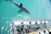 Great White Shark Tours, Gansbaai, South Africa