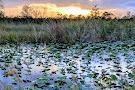 Arthur R. Marshall Loxahatchee National Wildlife Refuge