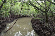 Mangrove Forest, Havelock Island, India