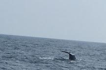 Whale Watching Mirissa - Whale Horizon, Mirissa, Sri Lanka