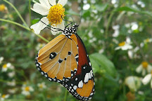 Stratford Butterfly Farm, Stratford-upon-Avon, United Kingdom
