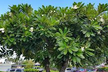 Coconut Marketplace, Kapaa, United States