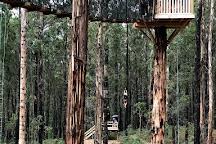 Kinglake Forest Adventures, Kinglake, Australia