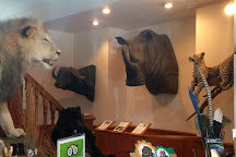 Bear-Ology Black Bear Museum, Plymouth, United States