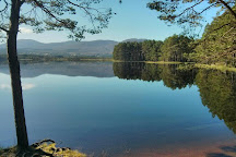 Loch Garten Nature Reserve, Boat of Garten, United Kingdom