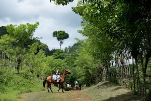 Horseback Riding Manuel Antonio