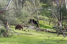 Black Hill Conservation Park, Adelaide, Australia