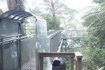 Illawarra Fly Treetop Walk, Knights Hill, Australia