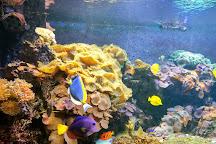 Aqua Vega Aquarium, Ankara, Turkey