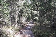 Norra Kvill National Park, Vimmerby, Sweden