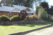 Lady Knox Geyser, Rotorua, New Zealand