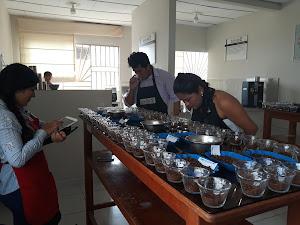 COOPERATIVA SOL&CAFE 2