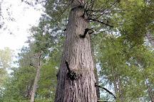Oregon Redwood Trail, Brookings, United States