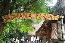 Sadhana Forest, Auroville, India