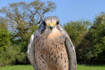 S&D Falconry, Stratford-upon-Avon, United Kingdom