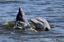 Estero Bay Express Dolphin & Sunset Boat Tours, Fort Myers Beach, United States