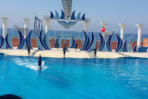 Sealanya Dolphinpark, Turkler, Turkey