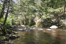 Salmon River State Forest, Colchester, United States