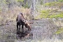 Hemlock Bluff Trail, Algonquin Provincial Park, Canada