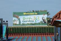 Busch Gardens, Tampa, United States