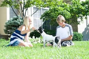 St Louis Dog Fence