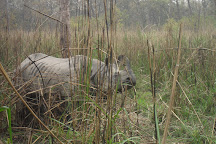 The Chitwan Tiger Guide Service And Mini Library, Sauraha, Nepal